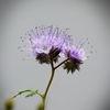 Blüte, Natur, Fotografie, It