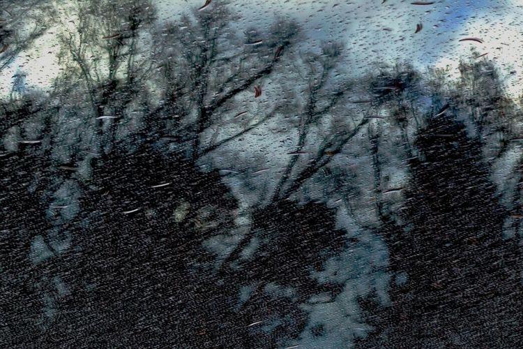 Blätter, Herbst, Hdr, Sturm, Abendhimmel, Fotografie