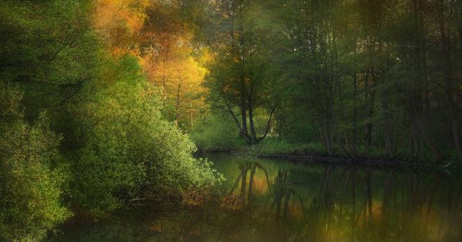 Baum, Landschaft, Natur, Stimmung, Herbst, Fotografie