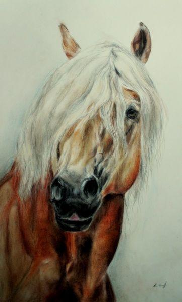Haflinger, Pferdeportrait, Pferdezeichnung, Zeichnungen