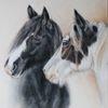 Pferdeportrait, Pferdezeichnung, Tinker, Zeichnungen