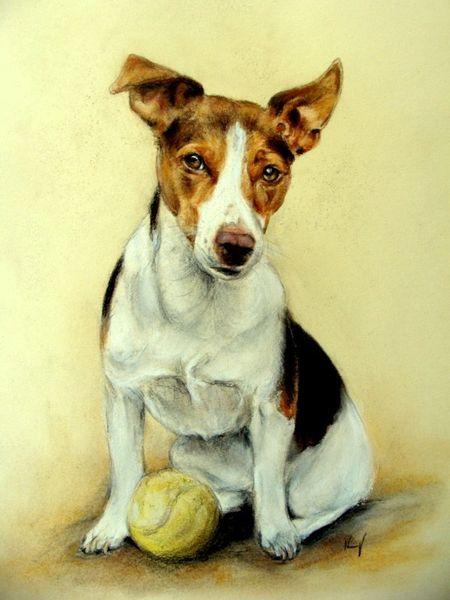 Hundezeichnung, Terrier, Hundeportrait, Zeichnungen