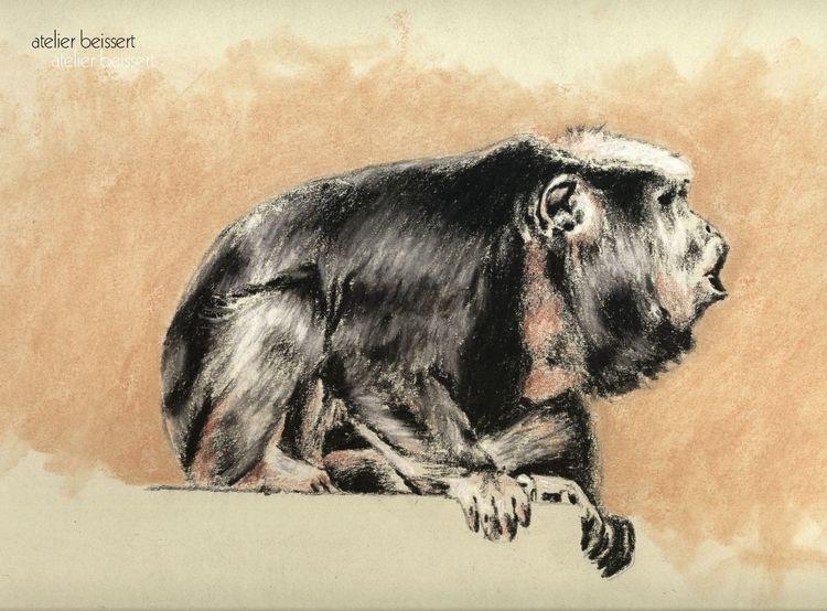 Affe, Tiere, Brüllaffe, Zoo, Leipzig, Zeichnungen