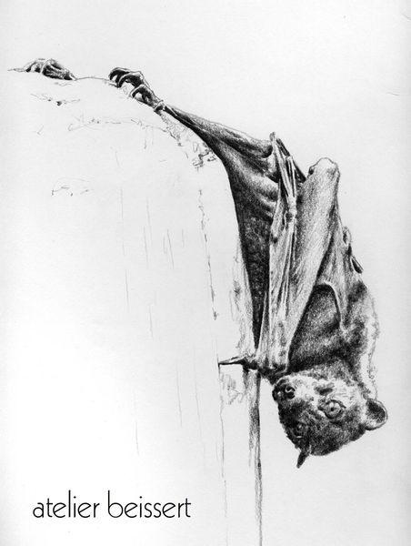 Zoo leipzig, Flugfuchs, Tiere, Fledermaus, Zeichnungen