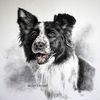 Tierzeichnung, Hund, Tiere, Auftragsmalerei