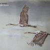 Vogel, Tiere, Kreide, Aves