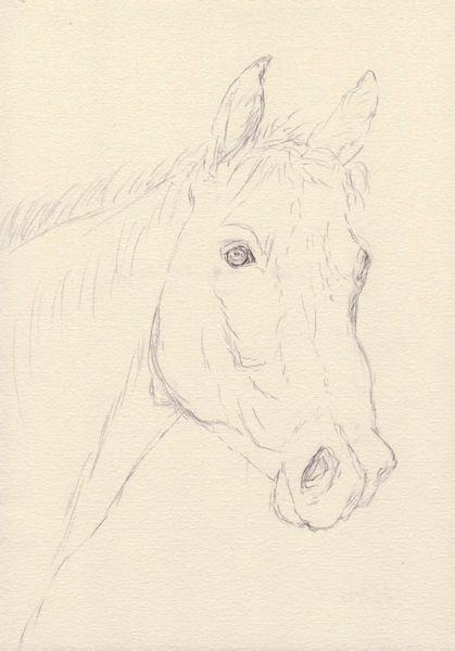 Zeichnung, Pferde, Pferdekopf, Zeichnungen