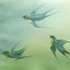 Aquarellmalerei, Tiere, Schwalbe, Aquarell