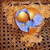 Nest, Nestflüchter, Bemalte stühle, Ei