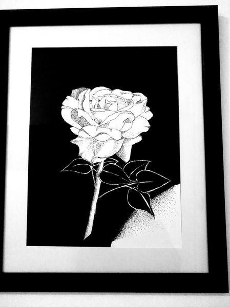 Rose, Blumen, Knospe, Zeichnungen