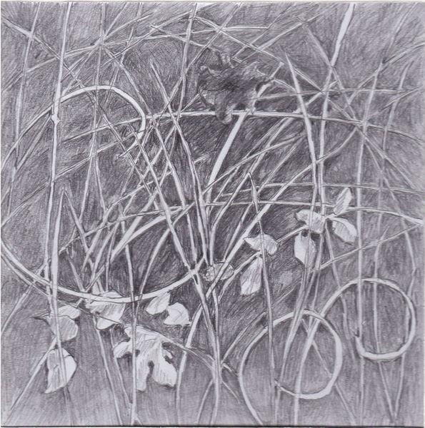 Zeichnung, Bleistiftzeichnung, Pflanzen, Natur, Zeichnungen