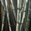 Bambus, Stange, Cevennen, Malerei