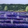 Provence, Landschaft, Lavendel, Malerei