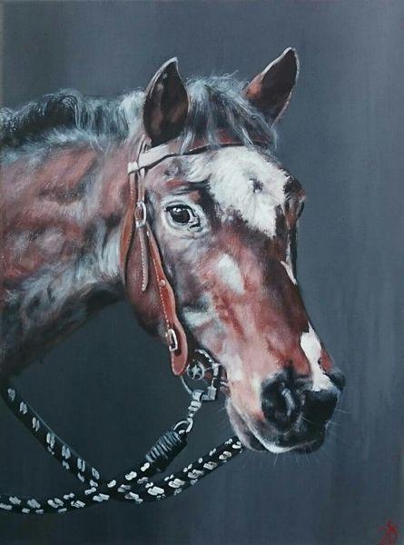 Portrait, Pferde, Pferdekopf, Malerei, Stute