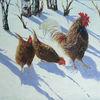 Huhn, Landleben, Bio, Winter