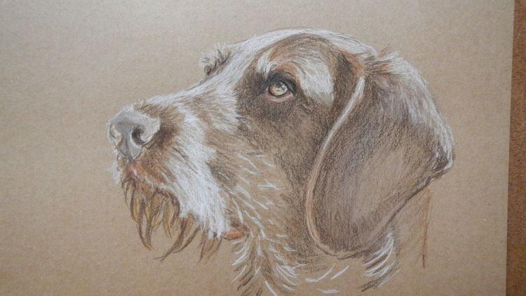 Hund, Buntstiftzeichnung, Deutsch drahthaar, Zeichnungen, Maya