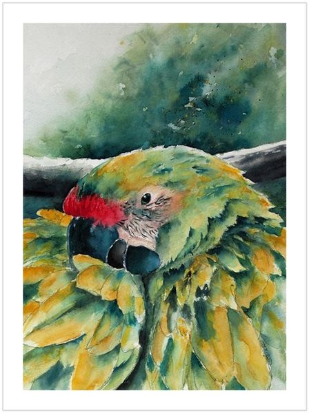 Grün, Aquarellmalerei, Soldatenara, Vogel, Gelb, Papagei