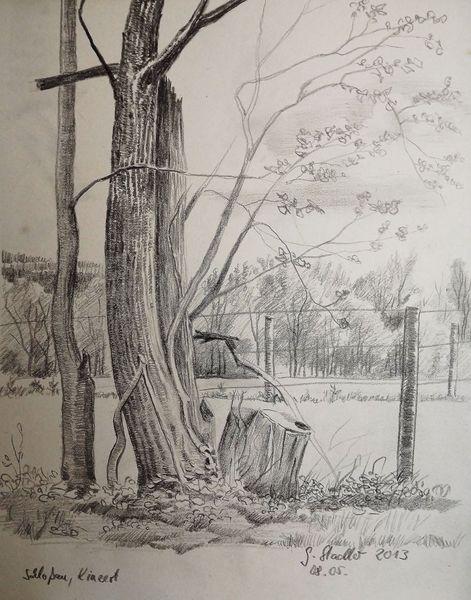 Odenwald, Wald, Wetter, Bleistiftzeichnung, Mudau, Blüte