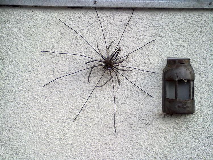 Kunsthandwerk, Spinne