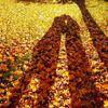 Herbst, Schattenspiel, Schatten, Archetypen