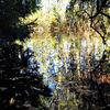 Herbst, Baum, Wasser, Fotografie