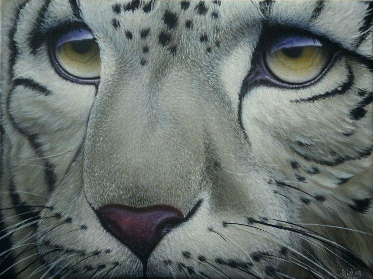 Portrait, Katze, Bad nauheim, Schneeleopard, Großkatze, Leopard