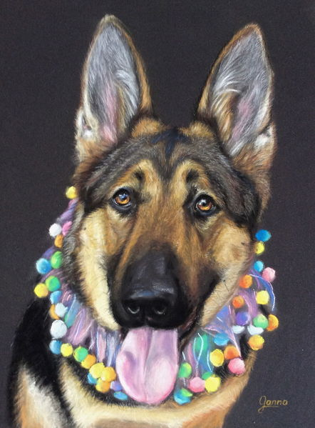 Portrait, Patel, Pastellmalerei, Deutscher schefferhund, German shepherd, Tiere