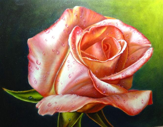 Rose, Blumen, Tropfen, Stillleben, Pflanzen, Malerei