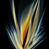 Leuchtkraft, Fruchtblume, Digitale kunst, Malerei