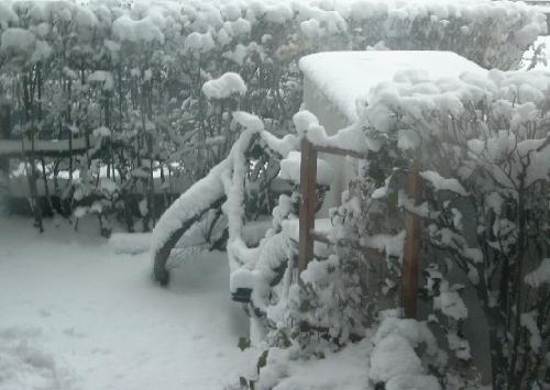 Hecke, Holz, Schnee, Fahrrad, Fotografie, Jahreszeiten