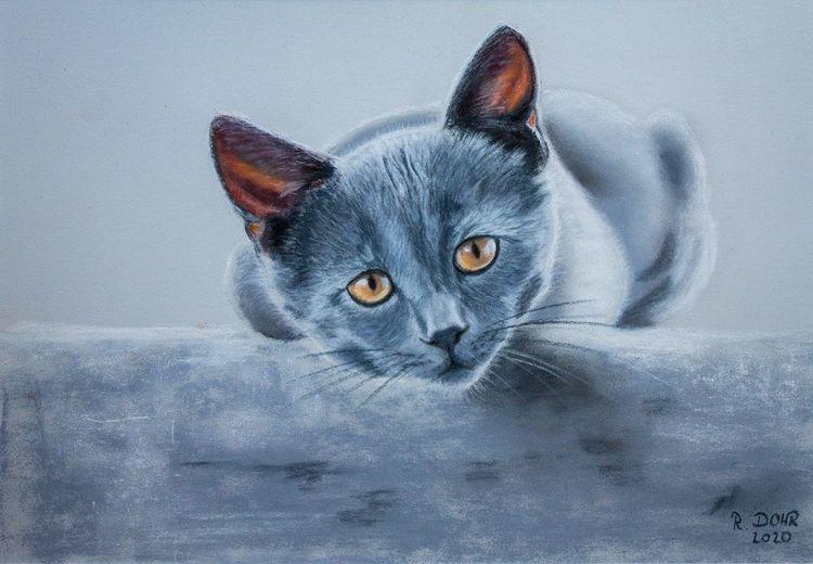 Pastellmalerei, Katze, Tiere, Haustier, Malerei