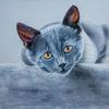 Haustier, Pastellmalerei, Tiere, Katze