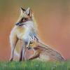 Fuchs, Pastellmalerei, Tiere, Zeichnung
