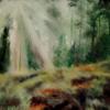Licht, Lichtung, Waldboden, Wald