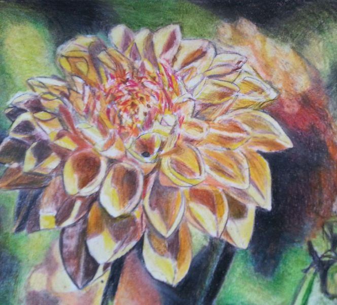 Buntstifte, Zeichnung, Dahlien, Schön, Blumen, Bunt