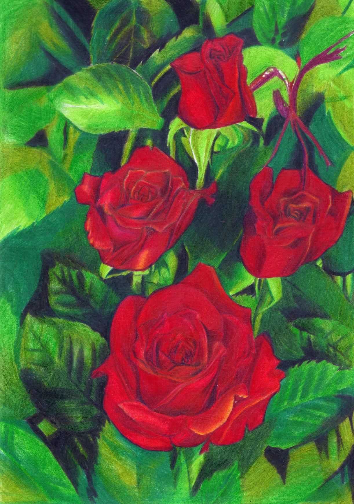image polychromos rosen zeichnungen von aries lyra on kunstnet. Black Bedroom Furniture Sets. Home Design Ideas