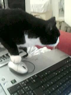 Haustier, Katze am computer, Lucie, Fotografie