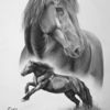 Schwarz weiß, Noriker, Stute, Pferde