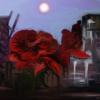 Leiter, Rot, Fantasie, Rose