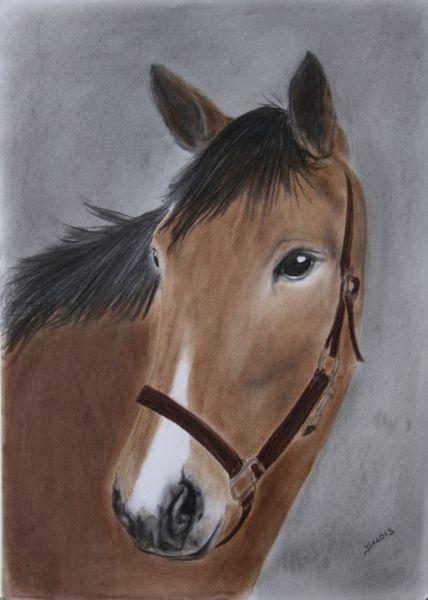 Portrait, Pferde, Pastellmalerei, Tierportrait, Zeichnung, Zeichnungen