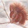 Zeichnung, Eichhörnchen, Pastellmalerei, Winter