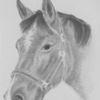 Tiere, Pferde, Zeichnung, Nach photo