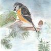 Winter, Kohlmeise, Tiere, Zeichnung