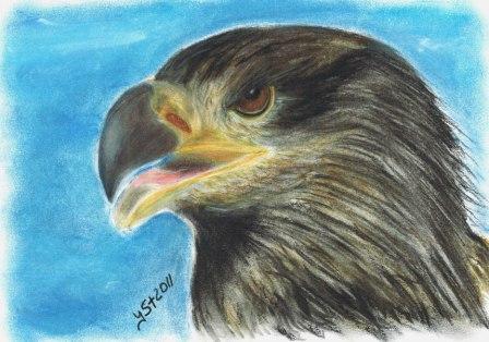 Vogel, Augen, Tierportrait, Pastellmalerei, Tiere, Portrait