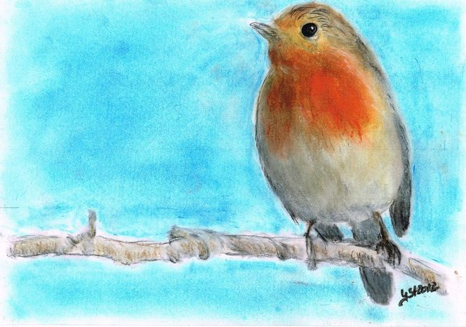Szene, Portrait, Tierzeichnung, Vogel, Rotkehlchen, Zeichnungen