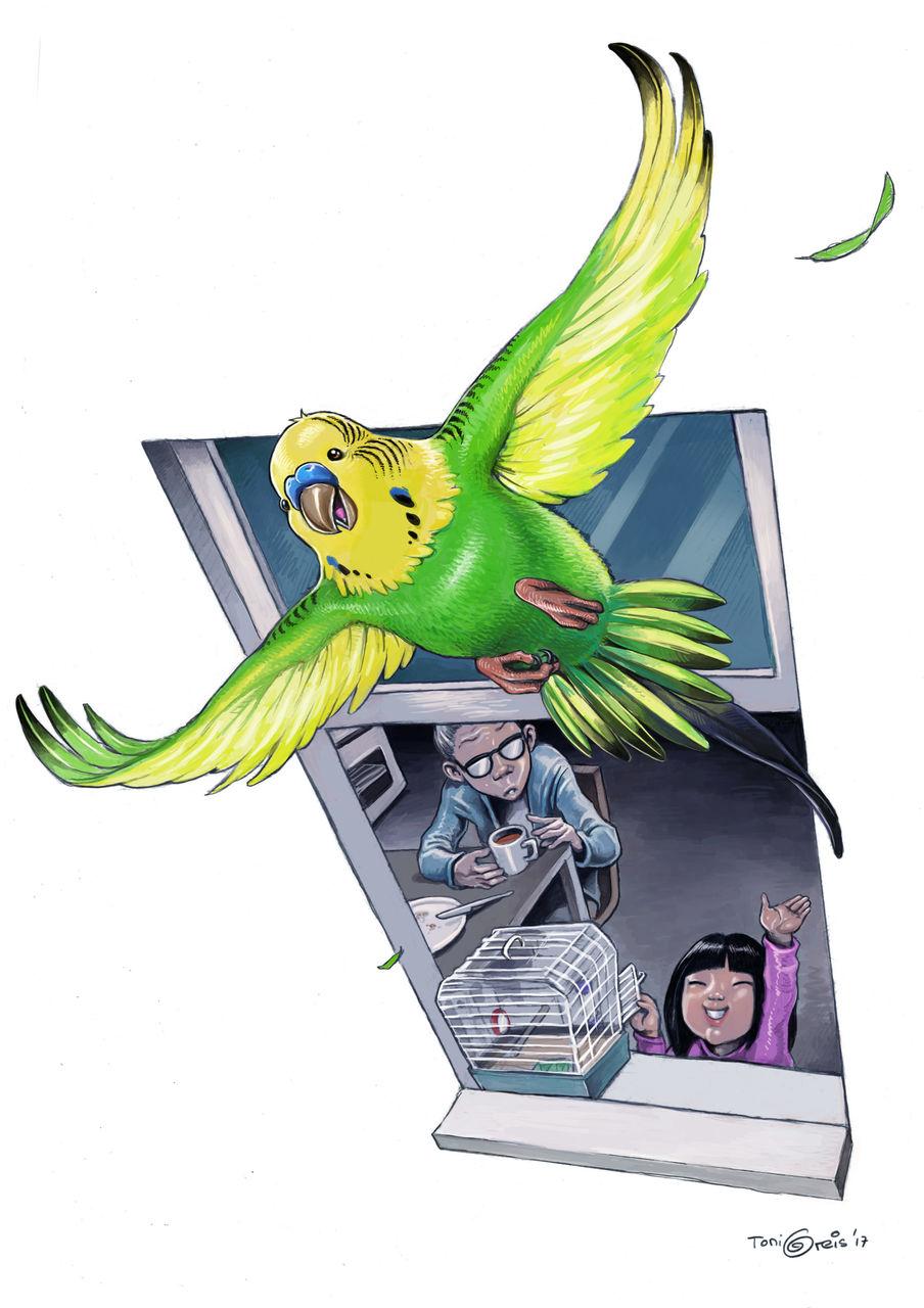 Image: Freiheit, Fenster, Bleistiftzeichnung, Vogel von ...