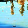 Spiegelung, Figur, Teich, Verzerrung