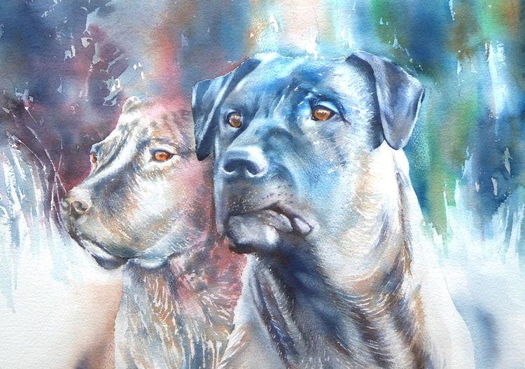 Guards, Dogs dogs eyes, Wächter, Aquarellmalerei, Aquarell