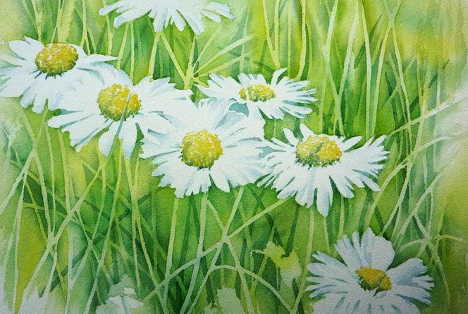 Gras, Blumen, Gänseblümchen, Frühling, Aquarellmalerei, Grün