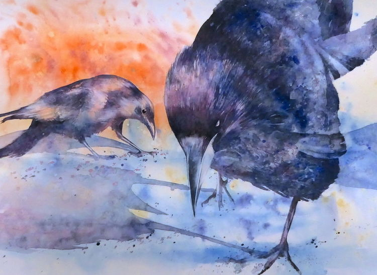 Aquarellmalerei, Vogel, Rabe, Hackordnung, Krähe, Aquarell
